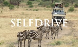 selfdrive